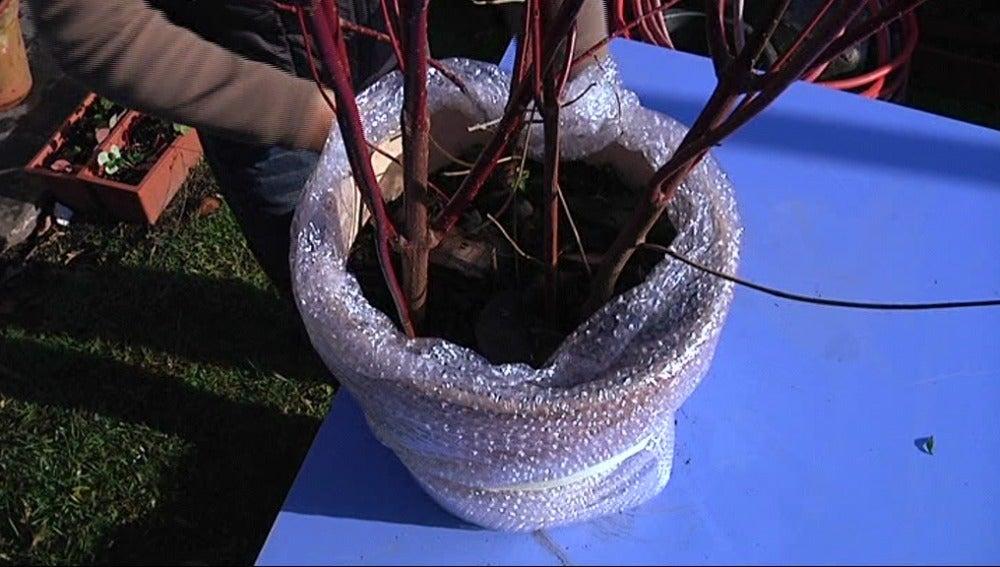 Protección de las plantas ante las heladas