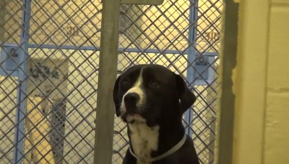 Un perro no puede ocultar su alegría tras ser adoptado por una familia