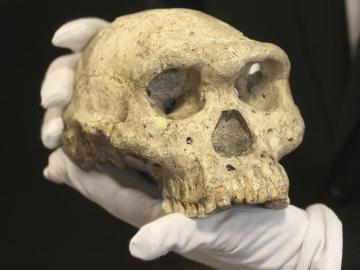Cráneo de un homínido