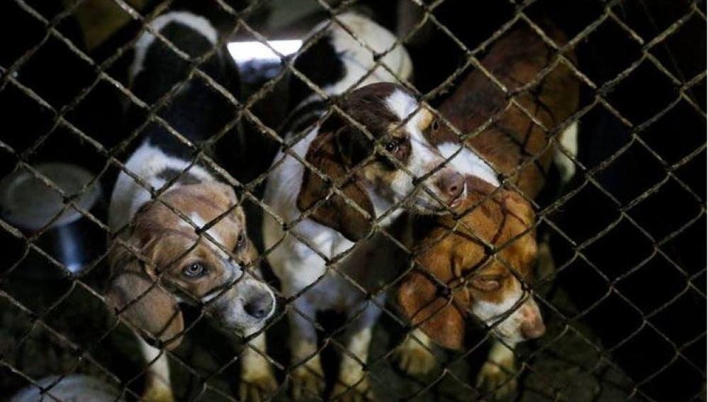 Holanda ha conseguido ser el primer país sin perros callejeros
