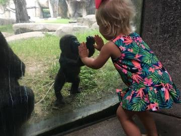 El tierno momento entre un gorila y una niña