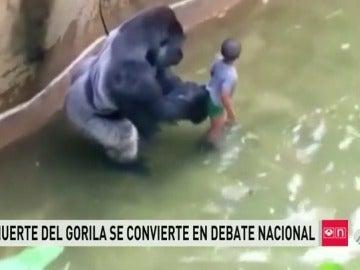 Polémica en EEUU por la muerte de un gorila abatido a tiros para rescatar a un niño