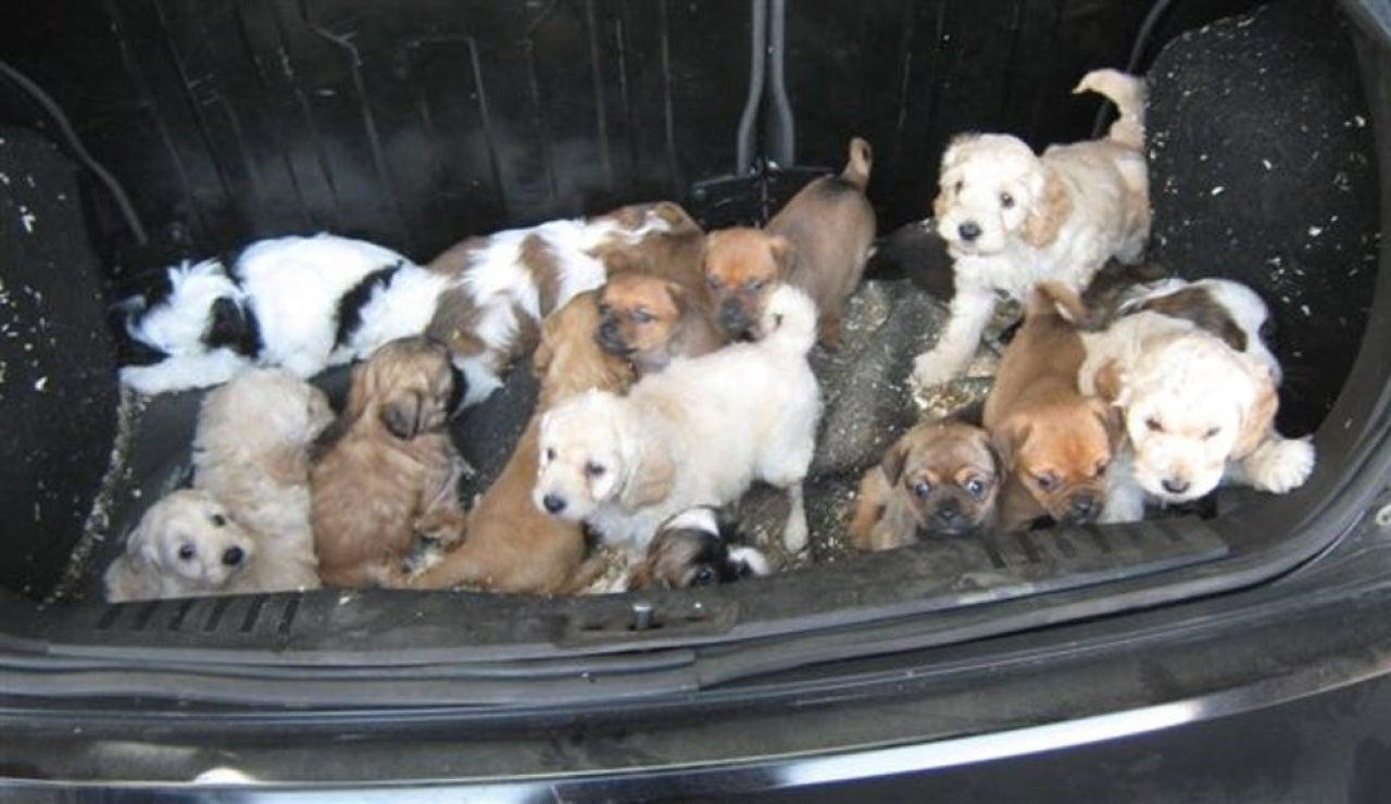 Los 20 cachorros rescatados