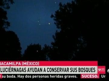 Las luciérnagas evitan la destrucción de los bosques en Ciudad de México