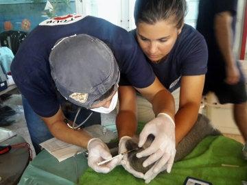 Miembros de la ONG internacional Four Paws tratando a un animal rescatado en el zoo de Jan Yunis