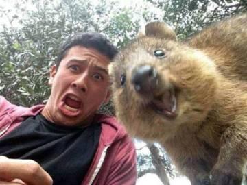 Selfie con un quokka