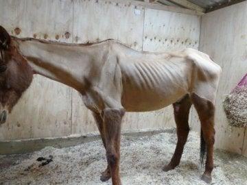 Fotos de un caballo esquelético