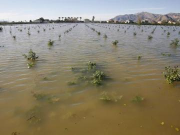 Una huerta inundada en Orihuela