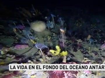 Vida en el fondo del Océano Antártico