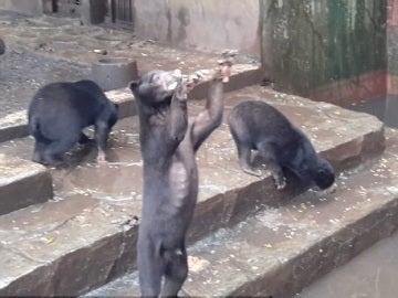 Uno de los osos pidiendo comida a los visitantes del zoo