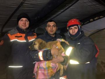 Los bomberos junto al perro rescatado
