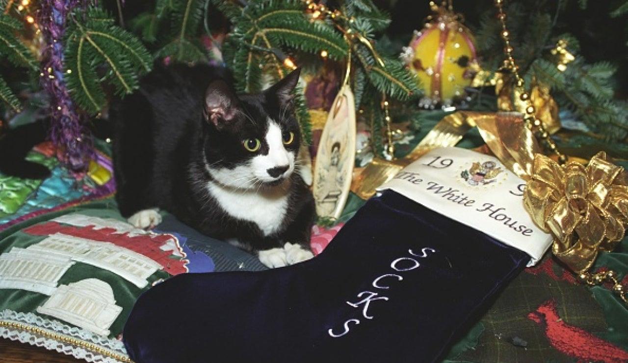 El gato Socks