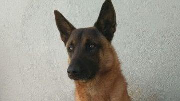 Django, el perro policía que ha encontrado la cocaína