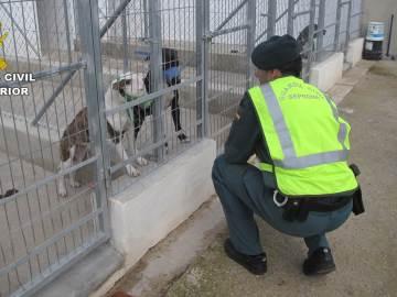 Muere un hombre en Alicante tras ser atacado por cinco perros de raza peligrosa