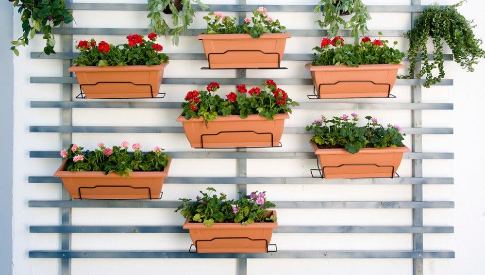 Crea un jardín vertical