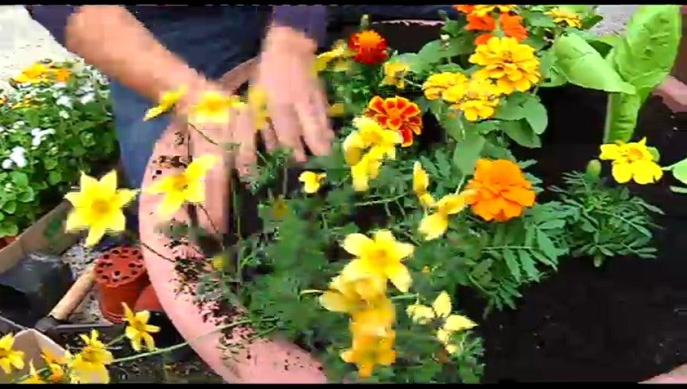 Tonos amarillos y naranjas, colores de primavera