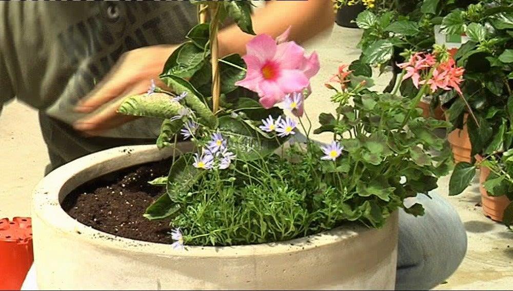 Decora con plantas colgantes