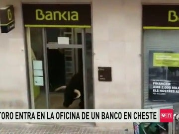 Un toro entra en una entidad bancaria al desviarse de su recorrido en Cheste