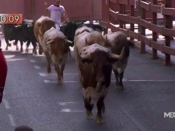Rápido y sin heridos el último encierro de las fiestas de San Sebastián de los Reyes 2016