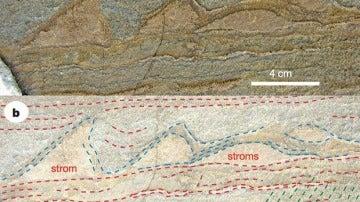 Imagen del estudio de Nature