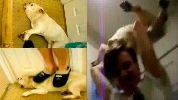Imágenes Baby, el perro maltratado