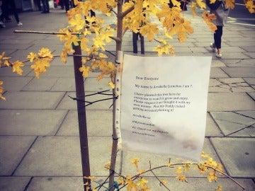 El árbol y su mensaje