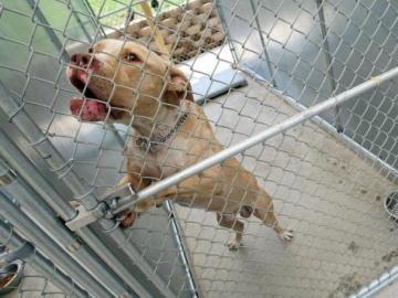 Imagen de archivo de un perro en un refugio
