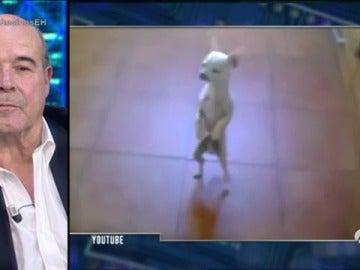 El perro más bailongo de Internet