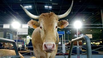 Vaca se escapa por París