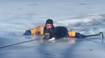 bombero rescata perro