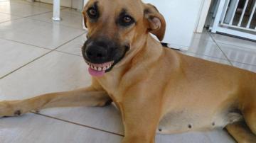 El perro con la dentadura