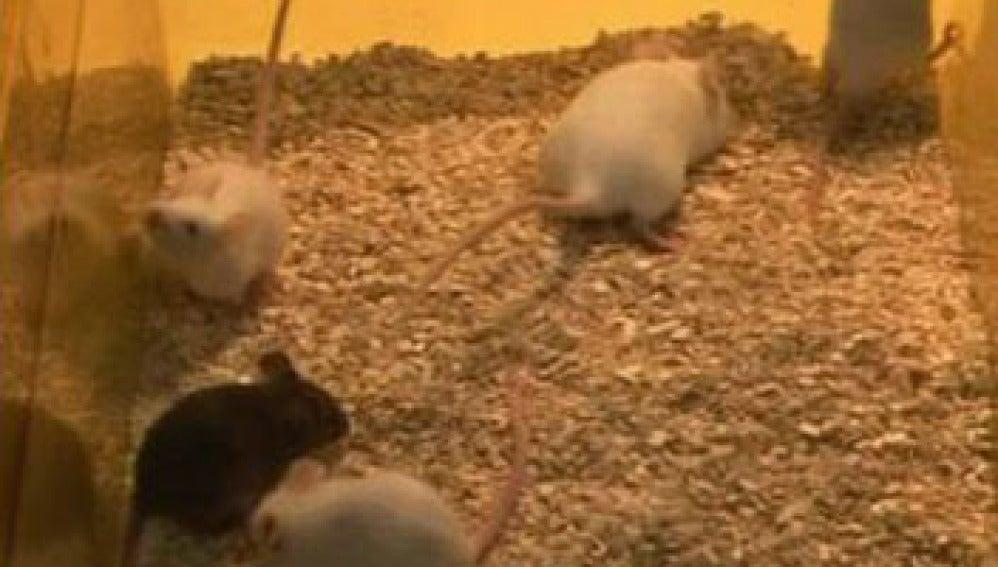 Ratones nacidos de células de la piel