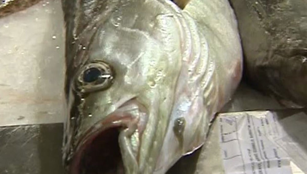 Pescado fresco sin riesgo de anisakis