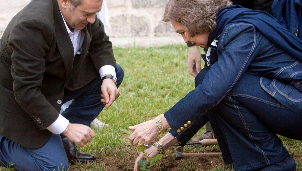 Doña Sofía planta un árbol