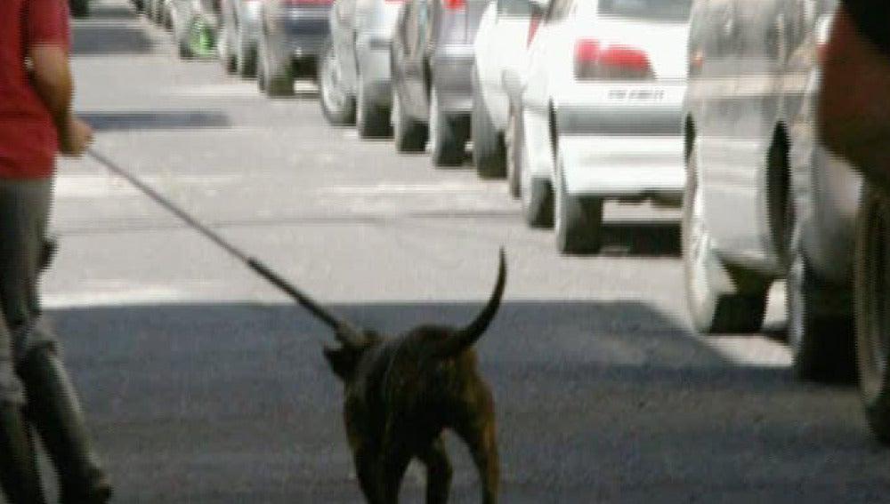 Aislan al pitbull que mató al niño de tres años