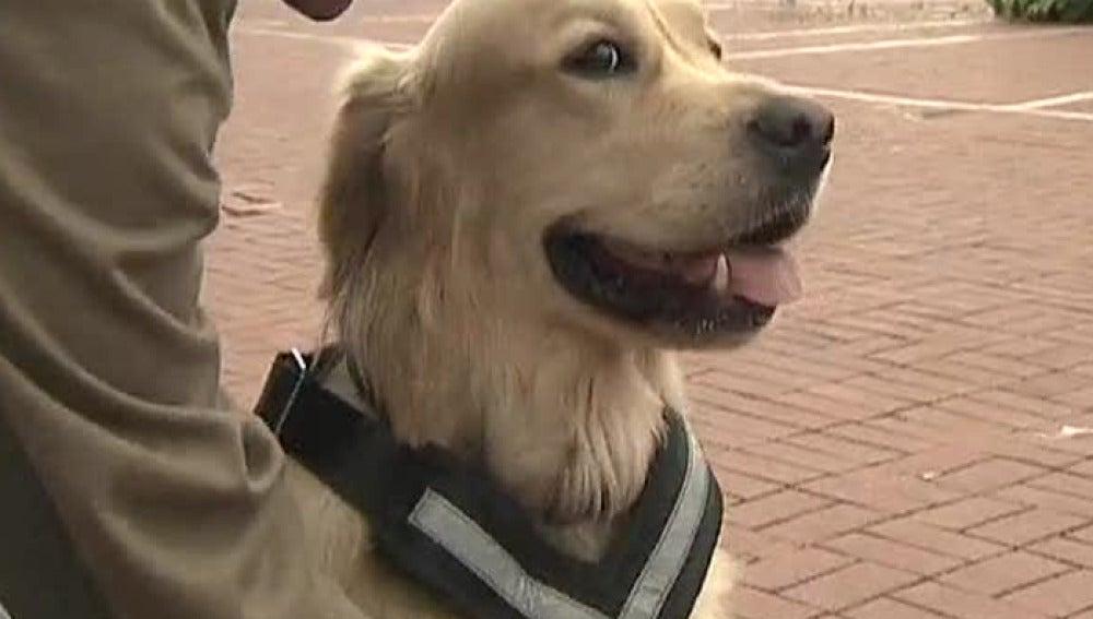 Seguridad para viajar con mascotas