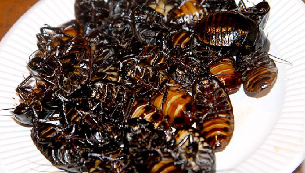 Los insectos tienen alto contenido en nutrientes aunque en algunas culturas causen rechazo