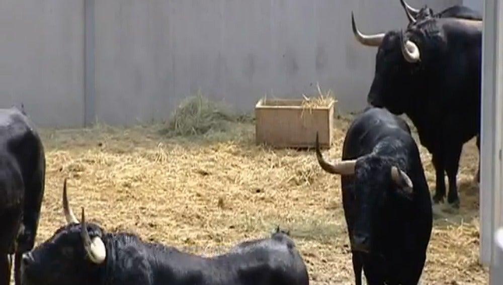 Los toros en los Corrales del Gas