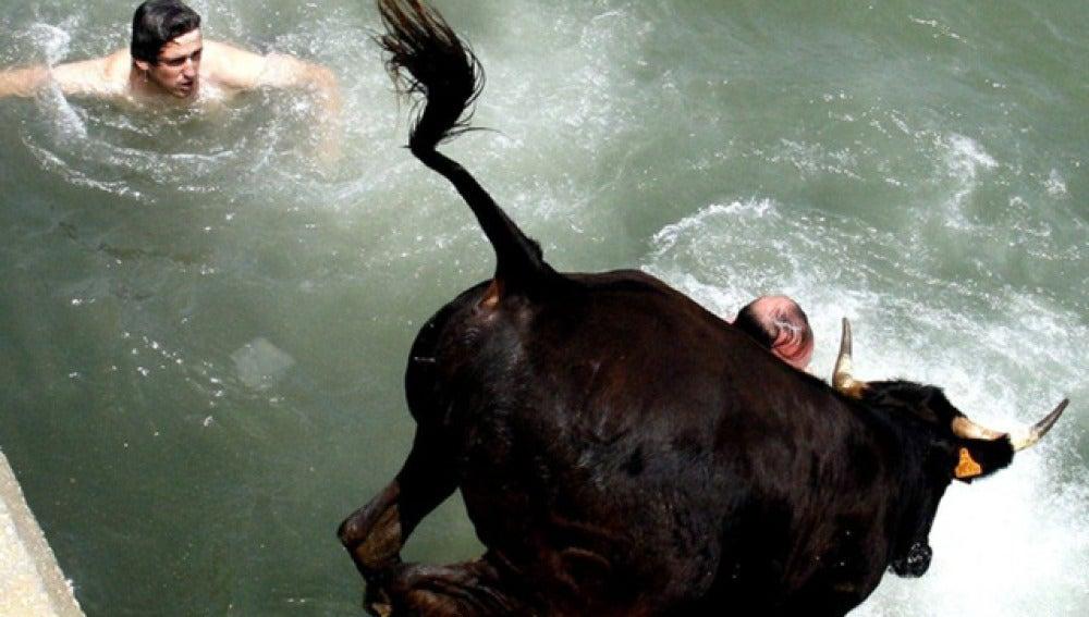 Un toro cae al agua