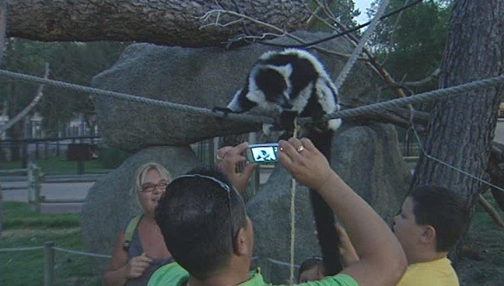 Un hombre fotografía de cerca a un lemur