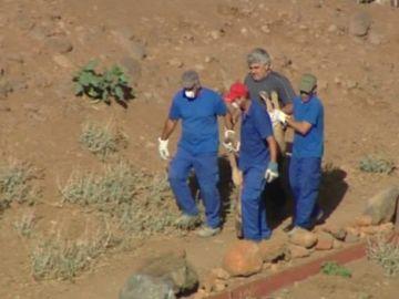Animales prácticamente abandonados se han retirado de chabolas de un barranco de Tenerife