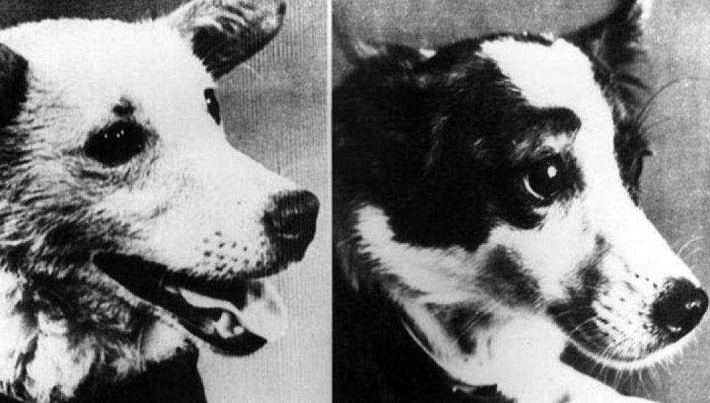 Belka y Strelka, las perras que viajaron al espacio