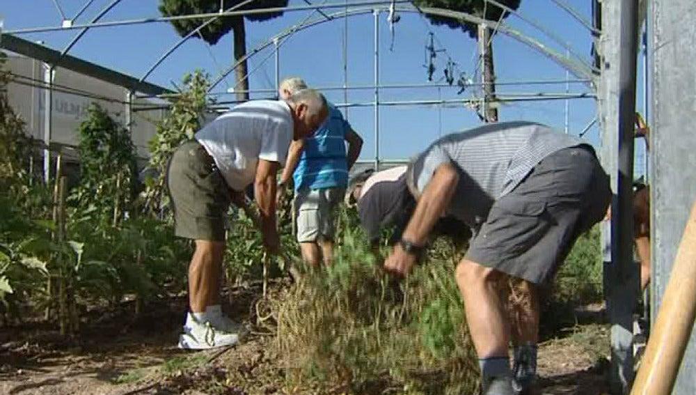 Encargados de cultivar las frutas y hortalizas