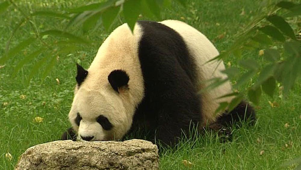 Cumpleaños de los panda