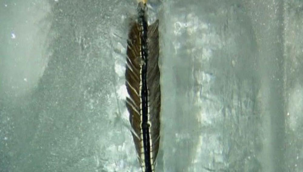 Un pluma en el hielo
