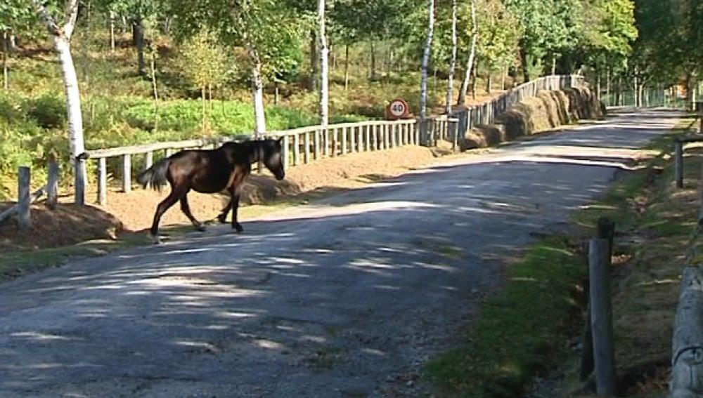 Cepos para caballos