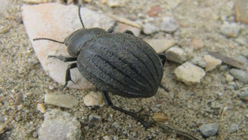 Un escarabajo paraliza de nuevo las obras del puerto de Granadilla