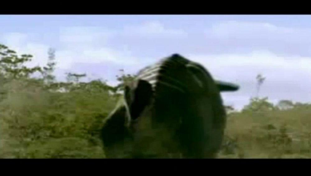 Discovery Channel rueda un documental sobre dinosarios en la isla