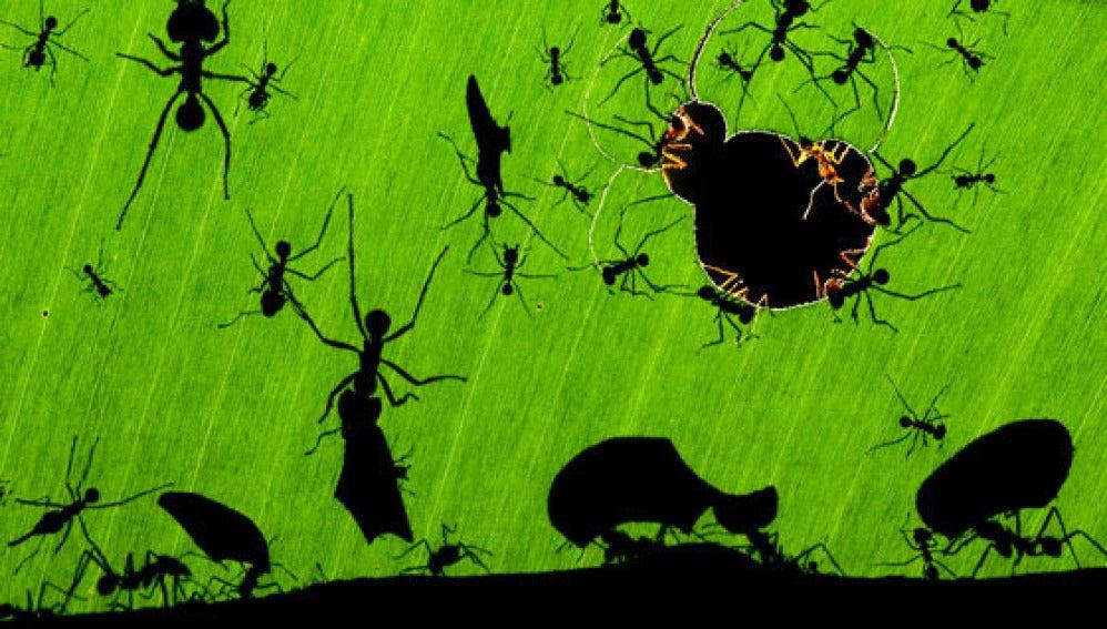 La maravilla de las hormigas