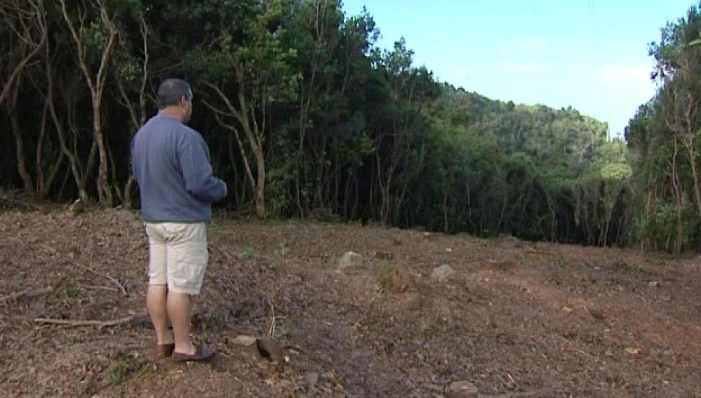 Tala indiscriminada de árboles en Tacoronte